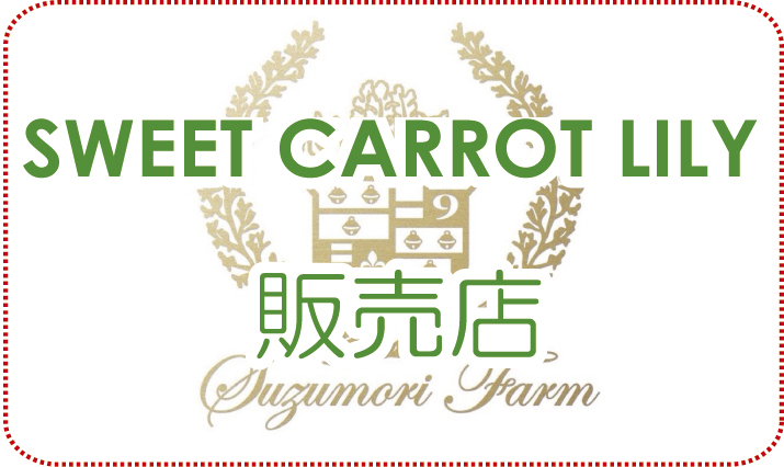 SWEET CARROT LILY 販売店